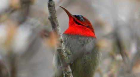 ベトナムの野鳥(5)Vietnam Birding