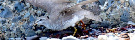 釣り糸で傷つく鳥たち