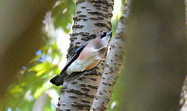 ダム湖~公園の鳥たち