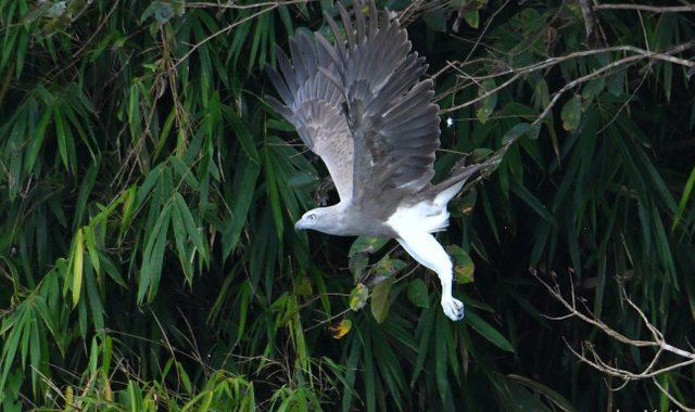 秋のタイ旅行記(8)Thai birding ボートでダム湖探鳥