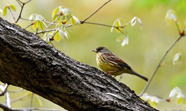 新芽の森の小鳥たち
