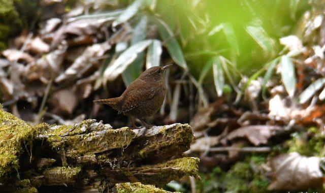 栃木県ハイキングの小鳥たち
