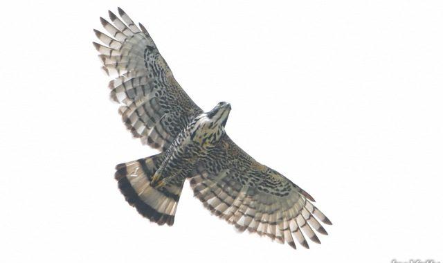 スマトラ探鳥記 Birding in Sumatra(19・了)