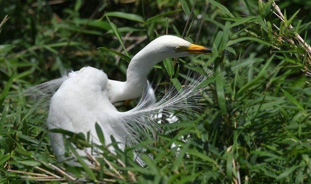 県南のサギコロニーの観察(1)