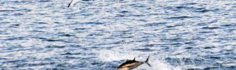 10月の大洗苫小牧航路(3)マグロと鳥の共演