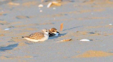 海辺の小さな仲間たち