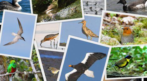 2019年の鳥見を振り返る